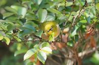 鳥はいます - Taro's Photo