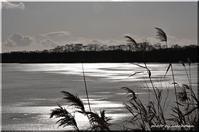 寒風のウトナイ湖 - 北海道photo一撮り旅