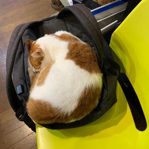 おいなりちゃんのベッド - ぶつぶつ独り言2(うちの猫ら2021)