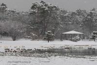 雪の舞う白鳥の湖 - デジタルで見ていた風景