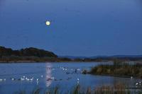 月と雁 2 - 遥かなる月光の旅