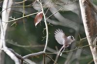 暫く会えない森の鳥さんたち - 鳥と共に日々是好日②