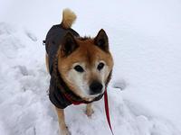 飛行犬zack - abby & zack 2