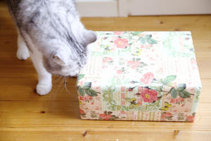 『 Shining me! box  冬 』 - A  KATOMO!