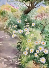 マーガレット 咲きほこる黒山三滝への道 - 青山一樹 水彩画のひととき