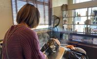 次世代ヘッドスパケア「ヒト羊水幹細胞培養液」 - 観音寺市 美容室 accha