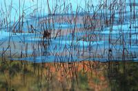 冬の蓮池#2 - 但馬・写真日和