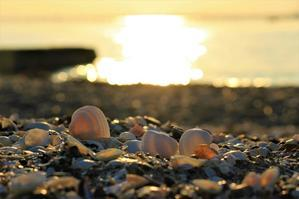 浜辺で寝そべって - 幻に魅せられて…