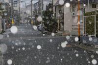 雪 - 写真を主とした日記です
