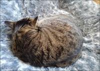 ヒメの新しい居場所‥‥‥‥&エネルギー基本計画・原発 - クロのこと・そして猫たちのこと~猫と共に老いを生きる~