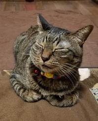 ご機嫌さん - キジトラ猫のトラちゃんダイアリー