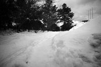 こうやって見るとN潟はやっぱり雪国なんだなぁ・・・20210120 - Yoshi-A の写真の楽しみ