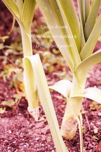 薬草としてのリーキ。 - Romantique Herb note*graine