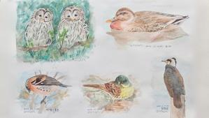 #ネイチャー・スケッチ #Naturejournal #sketch #Watercolo #水彩画 #野鳥 -