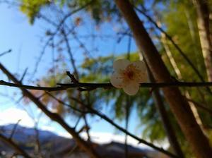 寒空の下で懸命に咲く花 - のほほんとミニベロ