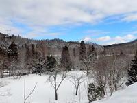 新雪の森は楽し - くつきの森フォトレター