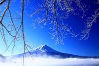 令和3年1月の富士(14)河口湖の霧氷と富士 - 富士への散歩道 ~撮影記~