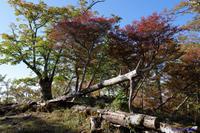 大台ケ原~シオカラ谷への道 - katsuのヘタッピ風景