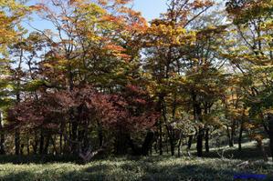 大台ケ原~シオカラ谷への道 -