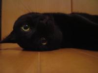 近況報告1月20日 - 香港と黒猫とイズタマアル2