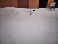 1月20日今日の写真 - ainosatoブログ02