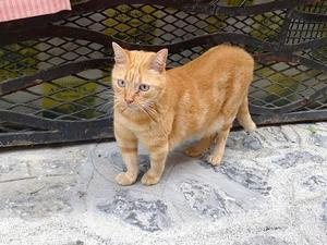 腰がひけてる猫 (Gatto)  - エミリアからの便り