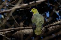 滝の公園(2021年1月21日) - ほとんど野鳥写真日記