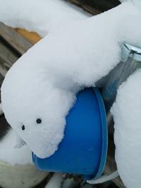 -4℃で薄晴れ・・・雪の動物朽木小川・気象台より - 朽木小川・気象台より、高島市・針畑・くつきの季節便りを!