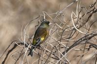 大寒の日散歩道の鳥たち - そらいろのパレット