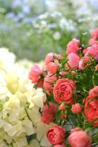 スプレーバラ「コーラルリング」 - 花色~あなたの好きなお花屋さんになりたい~
