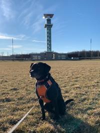 空気は冷たいけど晴れた公園散歩&コロナ - しんしな亭 in シンシナティ ブログ