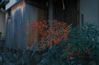 京都スナップ - 写真部