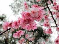 ムーチービーサーの中春を感じる - 京都ときどき沖縄ところにより気まぐれ
