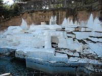 2021年1月天王寺動物園その1 - ハープの徒然草