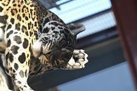2021年1月天王寺動物園その2 - ハープの徒然草