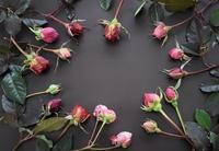 剪定でカットしたバラの蕾 - バラとハーブのある暮らし Salon de Roses