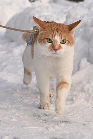 ♪猫は~喜び… - ちわりくんのありふれた毎日III
