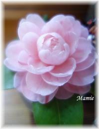 庭の花を飾って・・・ - おだやかに たのしく Que Sera Sera
