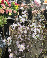 早咲き桜 - 自然を見つめて自分と向き合う心の花