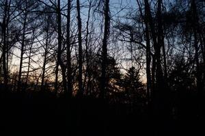 八ヶ岳にて 冬枯れ木立ち - YUKKESCRAP