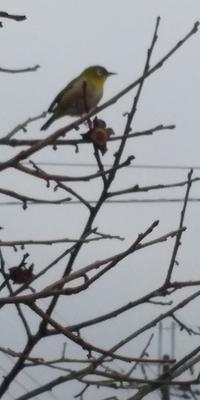 スマホで野鳥を撮る - 虫のひとりごと