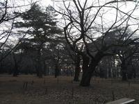 昨日の大宮公園 - 散策で発見、自分の街のいいところ