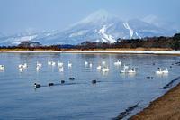 志田浜と磐梯山(猪苗代湖) - くろちゃんの写真