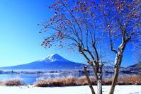 令和3年1月の富士(15)河口湖長崎公園からの富士 - 富士への散歩道 ~撮影記~