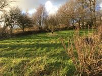 春は近いけど、雪が降りました。 - イギリス ウェールズの自然なくらし