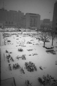年明け早々に断続的に雪が降り#備忘録01 - Yoshi-A の写真の楽しみ