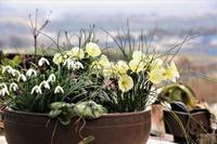 春を待ちながら・・・ - 季節の風を追いかけて