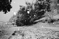 雪景色@園部龍穏寺 - デジタルな鍛冶屋の写真歩記