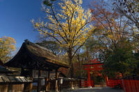 2020京都の紅葉・下鴨神社 - デジタルな鍛冶屋の写真歩記