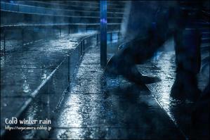冬の雨 - すずちゃんのカメラ!かめら!camera!
